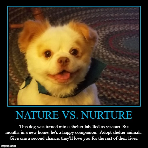 Nature vs. Nurture. Have you hugged your four-legged friend today? | NATURE VS. NURTURE | This dog was turned into a shelter labelled as viscous. Six months in a new home, he's a happy companion.  Adopt shelte | image tagged in demotivationals,adoption,animal rescue,dog,nature,memes | made w/ Imgflip demotivational maker