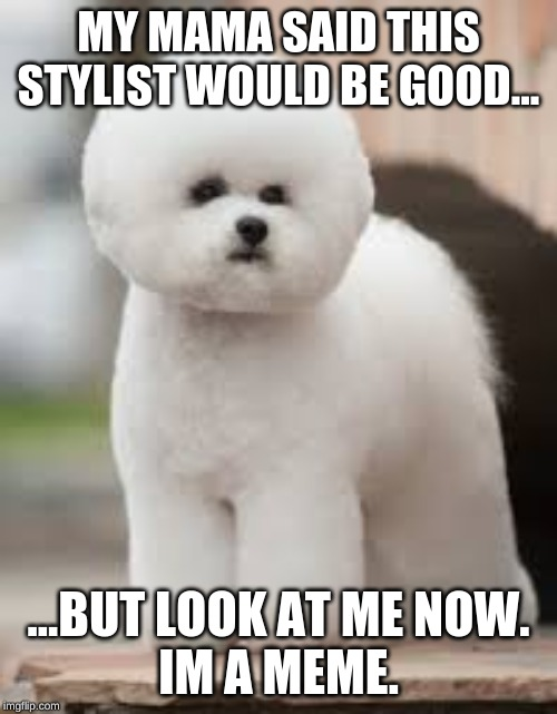 MY MAMA SAID THIS STYLIST WOULD BE GOOD... ...BUT LOOK AT ME NOW. IM A MEME. | image tagged in cute puppy | made w/ Imgflip meme maker