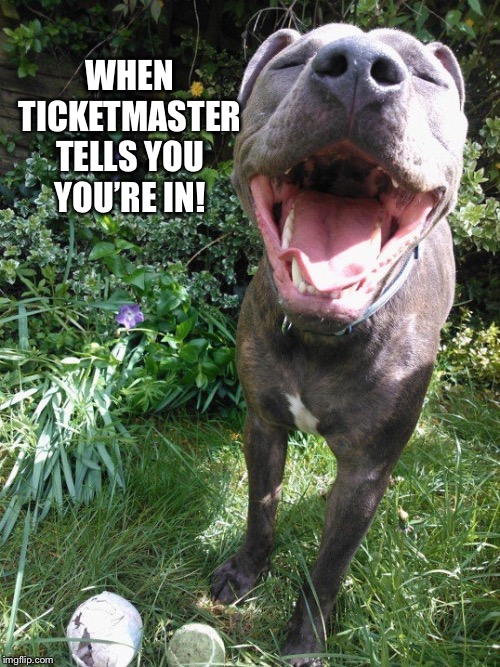 Marley 2- when ticketmaster tells you you're in! | WHENTICKETMASTERTELLS YOUYOU'RE IN! | image tagged in marley 2- ticket master,dogs,funny dogs,funny dog memes,dog memes | made w/ Imgflip meme maker