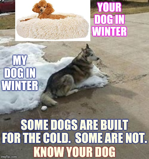 Hot Dogs |  YOUR DOG IN WINTER; MY DOG IN WINTER; SOME DOGS ARE BUILT FOR THE COLD.  SOME ARE NOT. KNOW YOUR DOG | image tagged in memes,hot dogs,big dog,big dog little dog,cold dog,good boy | made w/ Imgflip meme maker