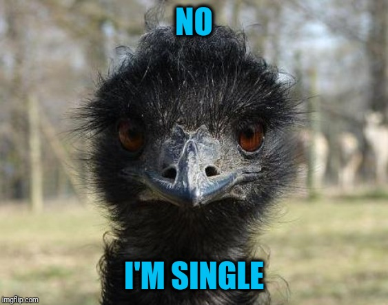 NO I'M SINGLE | image tagged in bad news emu | made w/ Imgflip meme maker