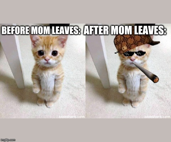 AFTER MOM LEAVES:; BEFORE MOM LEAVES: | image tagged in memes,cute cat | made w/ Imgflip meme maker
