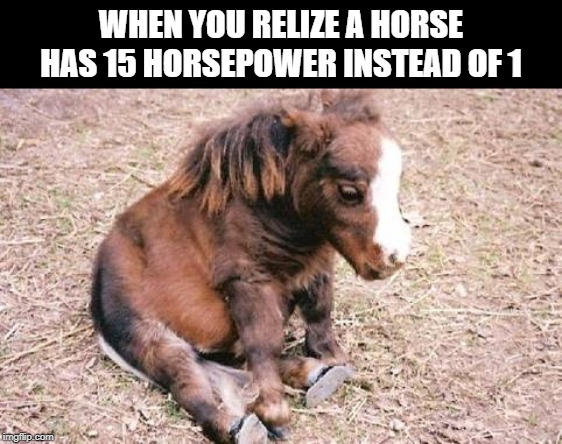 Sad horsey fat horsey | WHEN YOU RELIZE A HORSE HAS 15 HORSEPOWER INSTEAD OF 1 | image tagged in sad horsey fat horsey,oof,horse,horsepower | made w/ Imgflip meme maker