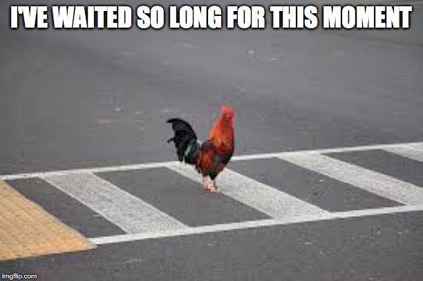 I'VE WAITED SO LONG FOR THIS MOMENT | image tagged in chicken cross road | made w/ Imgflip meme maker