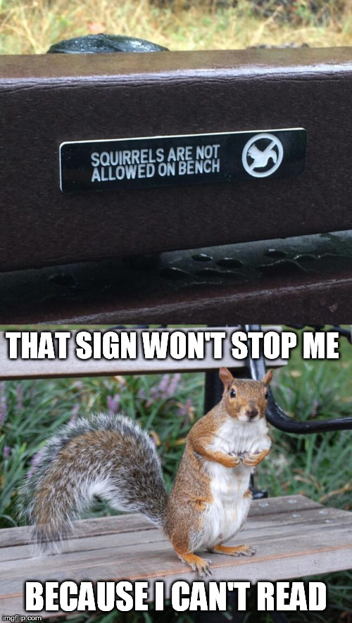 THAT SIGN WON'T STOP ME; BECAUSE I CAN'T READ | image tagged in squirrel,bench,sign,dw sign won't stop me because i can't read | made w/ Imgflip meme maker