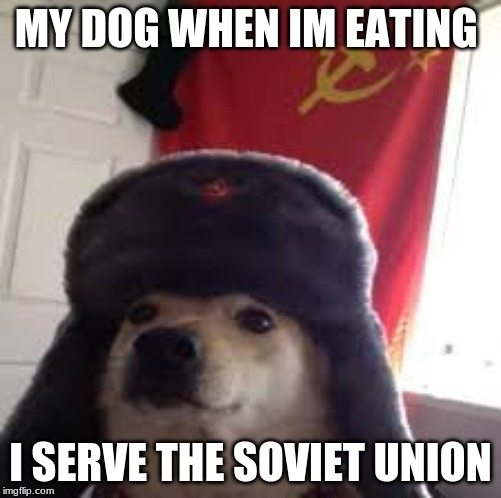 soviet dog |  MY DOG WHEN IM EATING; I SERVE THE SOVIET UNION | image tagged in dog meme,soviet union | made w/ Imgflip meme maker