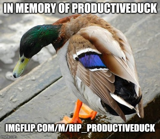 sad duck | IN MEMORY OF PRODUCTIVEDUCK IMGFLIP.COM/M/RIP_PRODUCTIVEDUCK | image tagged in sad duck | made w/ Imgflip meme maker