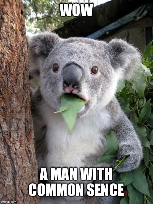 Surprised Koala Meme | WOW A MAN WITH COMMON SENSE | image tagged in memes,surprised koala | made w/ Imgflip meme maker