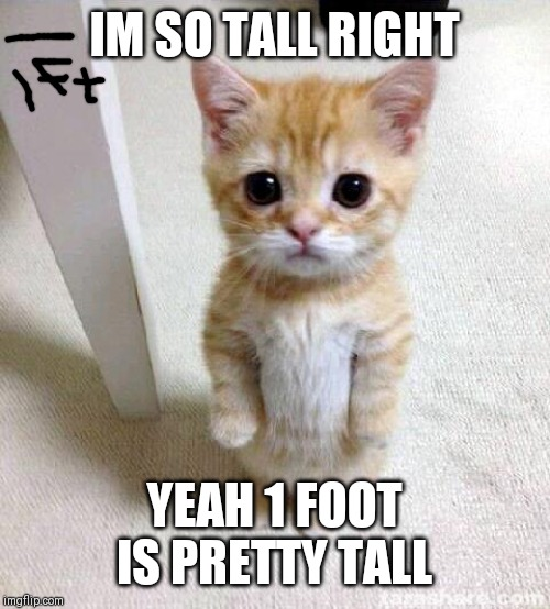 Cute Cat |  IM SO TALL RIGHT; YEAH 1 FOOT IS PRETTY TALL | image tagged in memes,cute cat | made w/ Imgflip meme maker