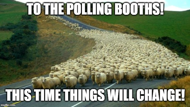 sheep |  TO THE POLLING BOOTHS! THIS TIME THINGS WILL CHANGE! | image tagged in sheep,indoctrination,vote,election 2020 | made w/ Imgflip meme maker
