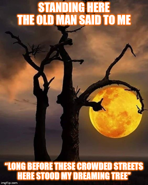 "DMB The Dreaming Tree | STANDING HERETHE OLD MAN SAID TO ME ""LONG BEFORE THESE CROWDED STREETSHERE STOOD MY DREAMING TREE"" 