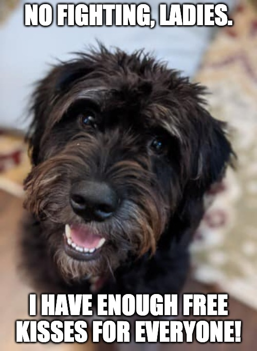 Dog kisses |  NO FIGHTING, LADIES. I HAVE ENOUGH FREE KISSES FOR EVERYONE! | image tagged in cute black dog,zeppelin,kisses,ladies man,dog,smiling dog | made w/ Imgflip meme maker