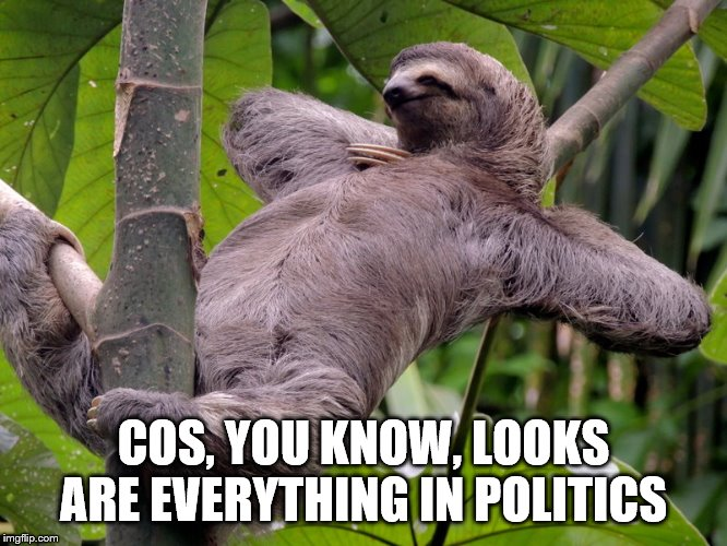 COS, YOU KNOW, LOOKS ARE EVERYTHING IN POLITICS | image tagged in lazy sloth | made w/ Imgflip meme maker