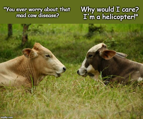 "two cows chatting |  Why would I care?  I'm a helicopter!""; ""You ever worry about that  mad cow disease? 
