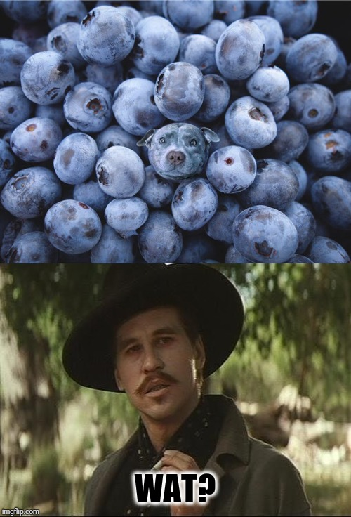I'll be your huckleberry | WAT? | image tagged in i'll be your huckleberry,memes,memes about memes,cute,puppy,meanwhile on imgflip | made w/ Imgflip meme maker