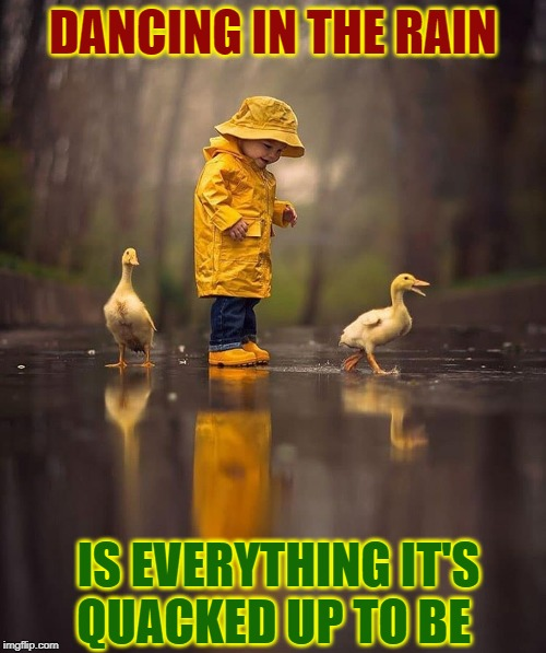 Real Live Rubber Duckies |  DANCING IN THE RAIN; IS EVERYTHING IT'S    QUACKED UP TO BE | image tagged in vince vance,ducks,cute animals,dancing,rain,raincoat | made w/ Imgflip meme maker