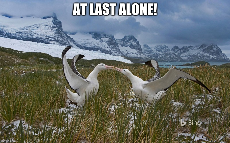 Love in the Wild | AT LAST ALONE! | image tagged in love | made w/ Imgflip meme maker