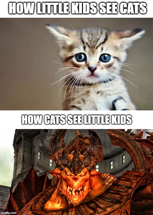 HOW LITTLE KIDS SEE CATS | image tagged in memes,so true memes,cats,kittens,cute cat,cute kittens | made w/ Imgflip meme maker