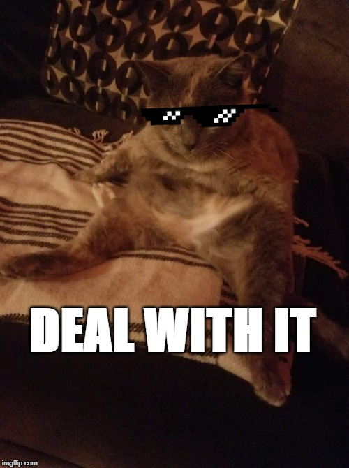 Human cat |  DEAL WITH IT | image tagged in human cat | made w/ Imgflip meme maker
