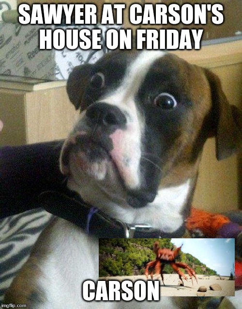 Surprised Dog | SAWYER AT CARSON'S HOUSE ON FRIDAY CARSON | image tagged in surprised dog | made w/ Imgflip meme maker