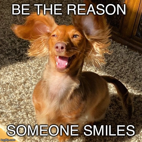 Little Miss |  BE THE REASON; SOMEONE SMILES | image tagged in smile,dog,happy,motivation,cute puppy | made w/ Imgflip meme maker