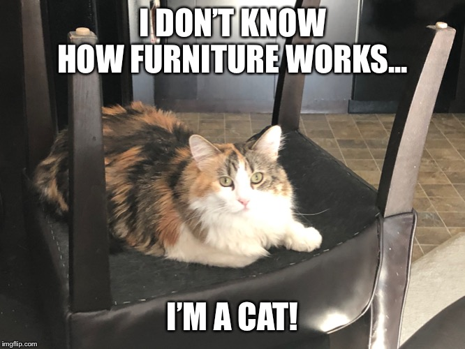 Dani! |  I DON'T KNOW HOW FURNITURE WORKS... I'M A CAT! | image tagged in daenerys | made w/ Imgflip meme maker