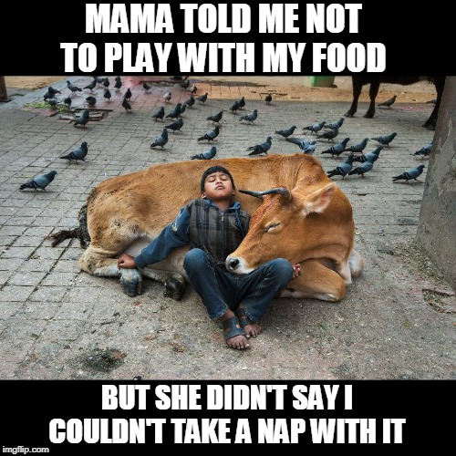 Dreaming of Cheese Burgers | MAMA TOLD ME NOT TO PLAY WITH MY FOOD BUT SHE DIDN'T SAY I COULDN'T TAKE A NAP WITH IT | image tagged in memes,burgers,cows,sleeping,food,eating | made w/ Imgflip meme maker