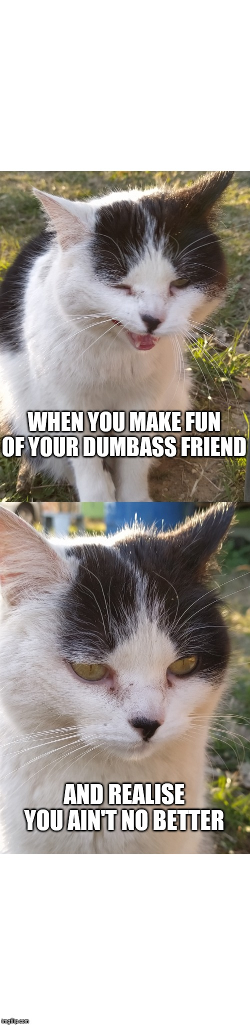 Laughing cat |  WHEN YOU MAKE FUN OF YOUR DUMBASS FRIEND; AND REALISE YOU AIN'T NO BETTER | image tagged in funny cat memes,laughing,moody,dumbass,friends | made w/ Imgflip meme maker