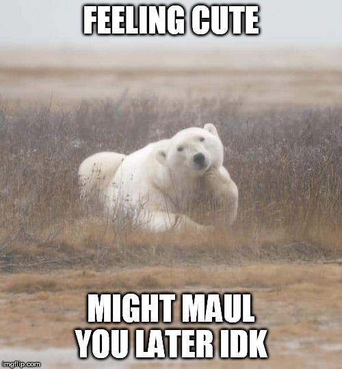 FEELING CUTE; MIGHT MAUL YOU LATER IDK | image tagged in bear,feeling cute | made w/ Imgflip meme maker