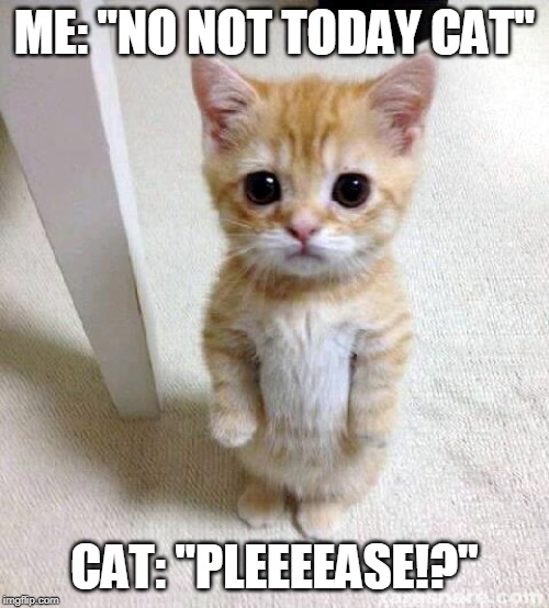 "Cute Cat |  ME: ""NO NOT TODAY CAT""; CAT: ""PLEEEEASE!?"" 