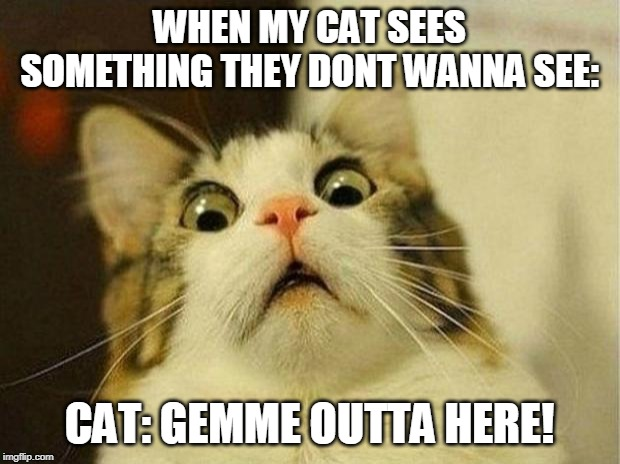 Scared Cat |  WHEN MY CAT SEES SOMETHING THEY DONT WANNA SEE:; CAT: GEMME OUTTA HERE! | image tagged in memes,scared cat | made w/ Imgflip meme maker