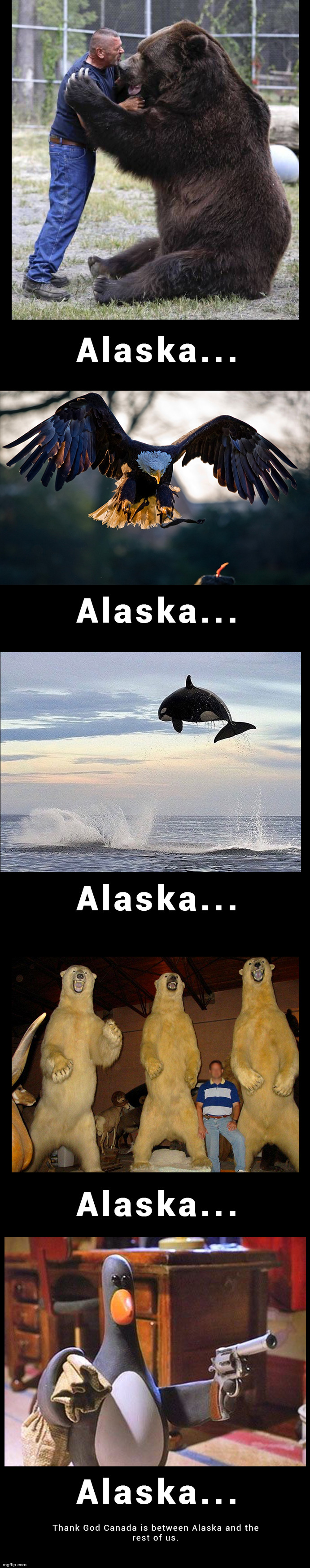 image tagged in alaska,grizzly bear,eagle,penguin | made w/ Imgflip meme maker