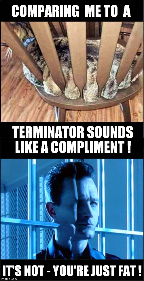 Liquid Cat ? | COMPARING  ME TO  A IT'S NOT - YOU'RE JUST FAT ! TERMINATOR SOUNDS LIKE A COMPLIMENT ! | image tagged in fun,fat cat,terminator 2 | made w/ Imgflip meme maker