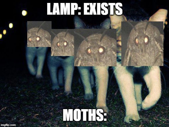 Wrong Neighboorhood Cats Meme | LAMP: EXISTS MOTHS: | image tagged in memes,wrong neighboorhood cats | made w/ Imgflip meme maker