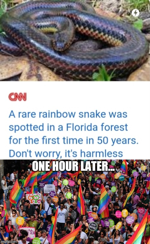 ONE HOUR LATER... | image tagged in lgbt,gay,gay pride,funny,cnn,rainbow snake | made w/ Imgflip meme maker