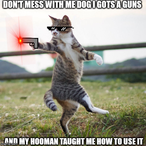 Dogs With Guns Vs Cats With Guns