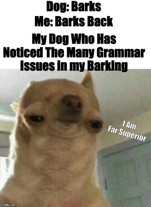 Dog: Barks; Me: Barks Back; My Dog Who Has Noticed The Many Grammar Issues in my Barking; I Am Far Superior | made w/ Imgflip meme maker