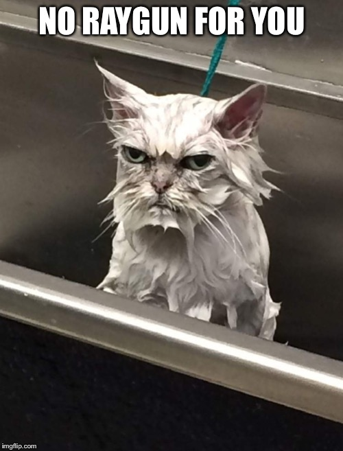 Wet Unhappy cat | NO RAYGUN FOR YOU | image tagged in wet unhappy cat | made w/ Imgflip meme maker