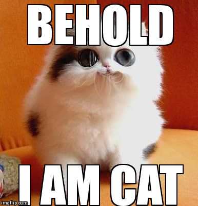 BEHOLD I AM CAT | image tagged in cute,cats,animals | made w/ Imgflip meme maker