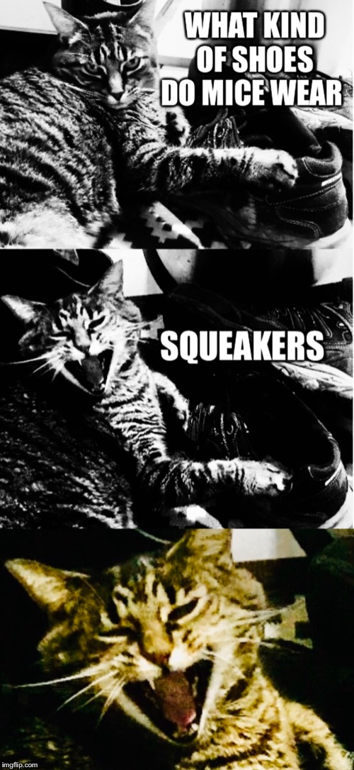What kind of shoes do mice wear? Squeakers. | image tagged in cat,shoes,funny,laughing,cat meme,tiger cat | made w/ Imgflip meme maker