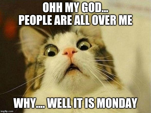 Scared Cat |  OHH MY GOD... PEOPLE ARE ALL OVER ME; WHY.... WELL IT IS MONDAY | image tagged in memes,scared cat | made w/ Imgflip meme maker