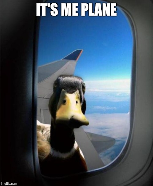 IT'S ME PLANE | image tagged in duck on plane wing | made w/ Imgflip meme maker
