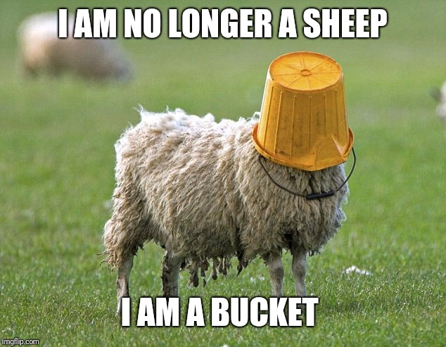 I AM NO LONGER A SHEEP I AM A BUCKET | image tagged in stupid sheep | made w/ Imgflip meme maker
