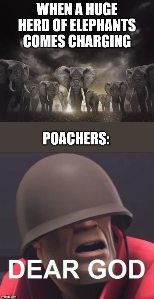 WHEN A HUGE HERD OF ELEPHANTS COMES CHARGING; POACHERS: | image tagged in 96 elephants so what | made w/ Imgflip meme maker