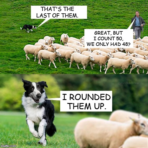Bad Pun Sheep Dog |  THAT'S THE LAST OF THEM. GREAT, BUT I COUNT 50, WE ONLY HAD 48? I ROUNDED THEM UP. | image tagged in memes,sheep,dogs,math,bad pun,bad pun dog | made w/ Imgflip meme maker