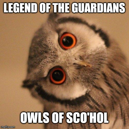 inquisitve owl | LEGEND OF THE GUARDIANS OWLS OF SCO'HOL | image tagged in inquisitve owl | made w/ Imgflip meme maker