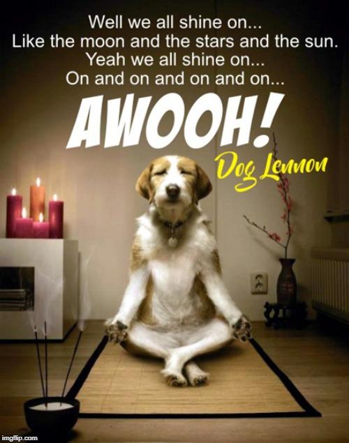 Instant Karma Dog Lennon Imgflip