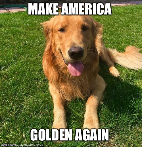 Golden retriever |  MAKE AMERICA; GOLDEN AGAIN | image tagged in golden retriever | made w/ Imgflip meme maker