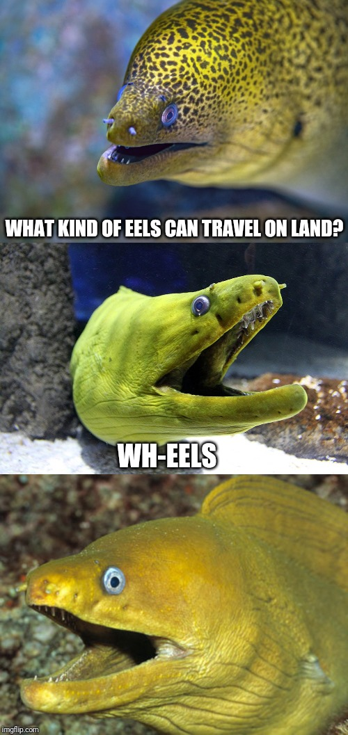 WHAT KIND OF EELS CAN TRAVEL ON LAND? WH-EELS | made w/ Imgflip meme maker