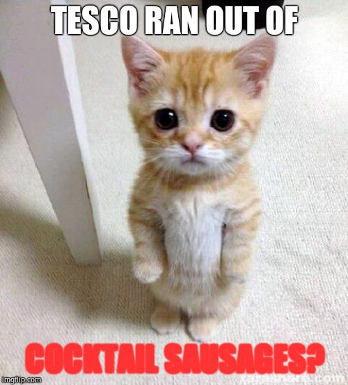 Cute Cat |  TESCO RAN OUT OF; COCKTAIL SAUSAGES? | image tagged in memes,cute cat | made w/ Imgflip meme maker
